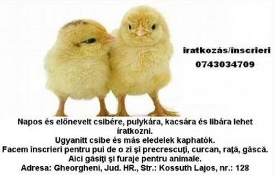 brazera_kisujsag_nagy