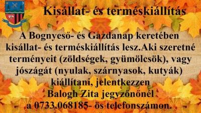 gazdanap_csomafalva_kisallat