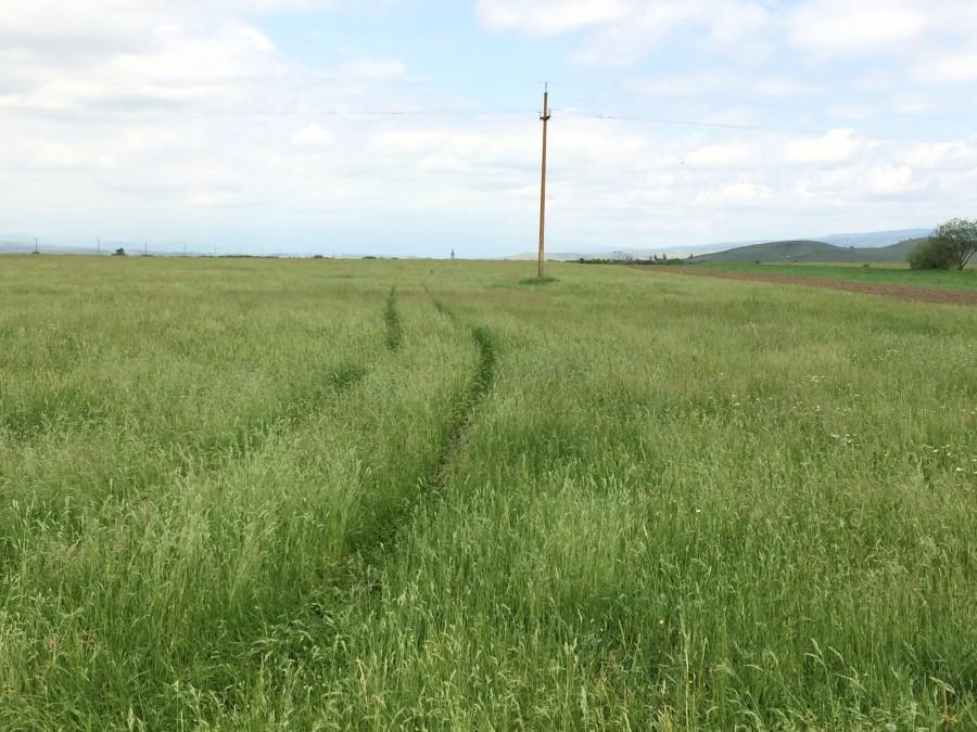 A permetező traktor nyomai Gyergyószárhegy határában. Fotó Máthé István