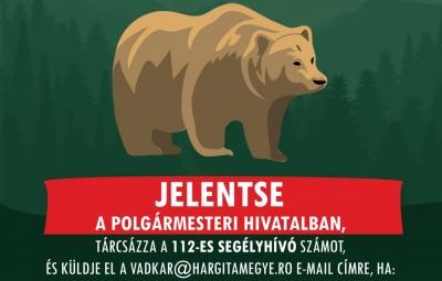 medve_jelent